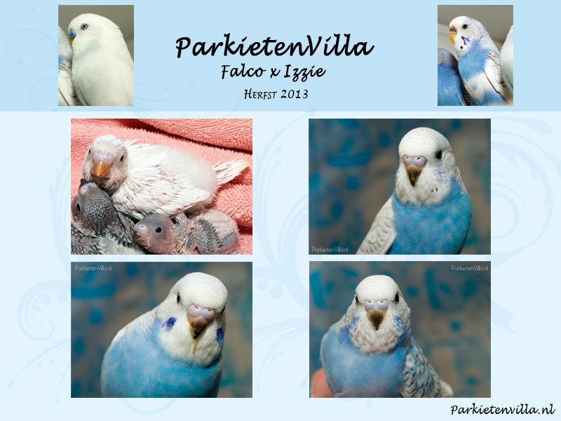 nestje-Falco-&-Izzie
