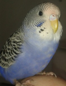 Piet2