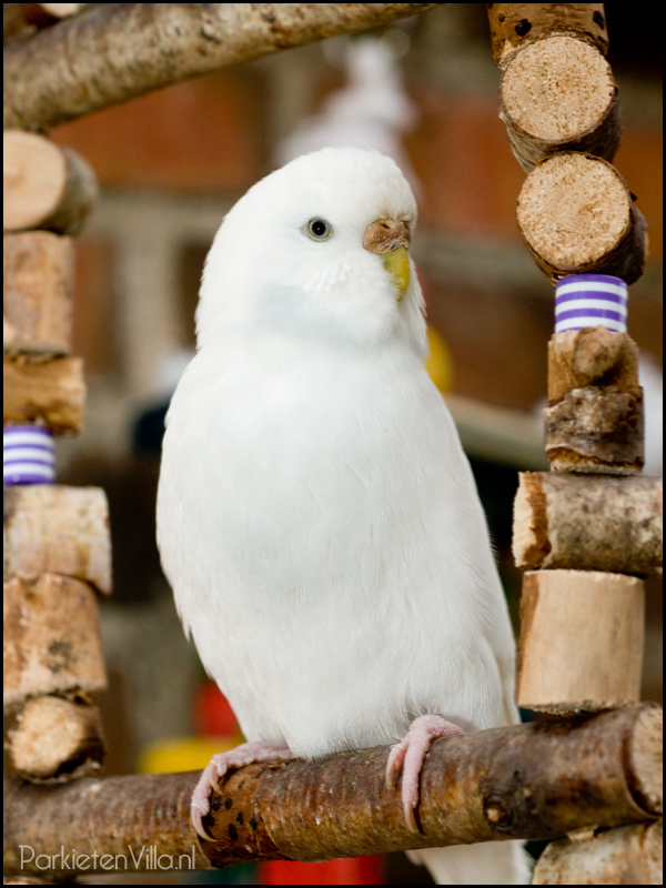 Vogel speelgoed