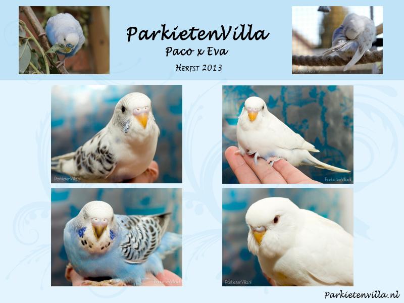 nestje-Paco-&-Eva