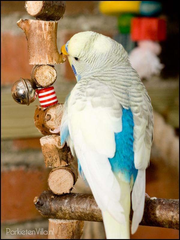 creme masker grijsvleugels hemelsblauw